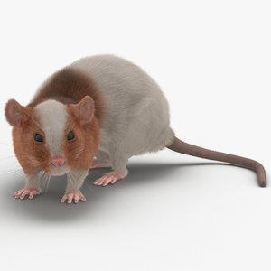 3d rat 3 pose 5