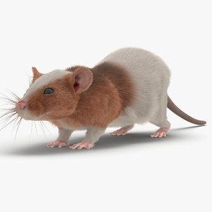 rat 3 3d max