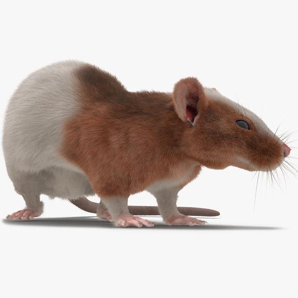 3d rat 3 rigged