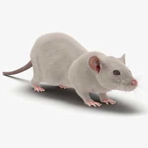 3d model white rat fur
