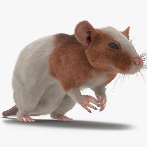 max rat 3 pose 4