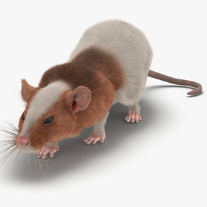 3d model rat 3 pose