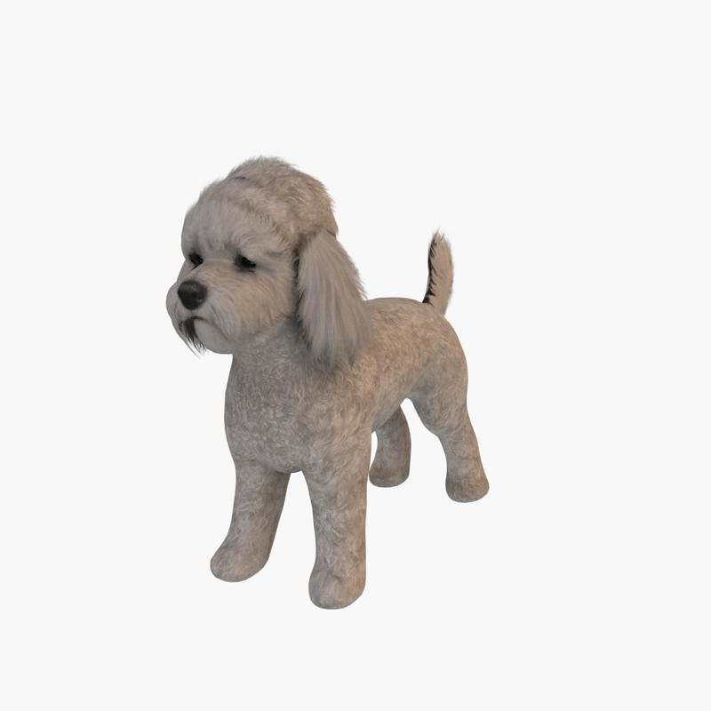 poodle dog max