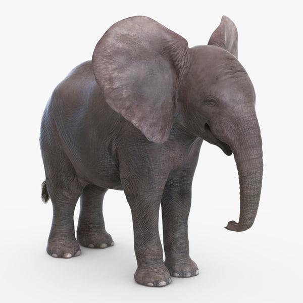 3d baby elephant rigged model