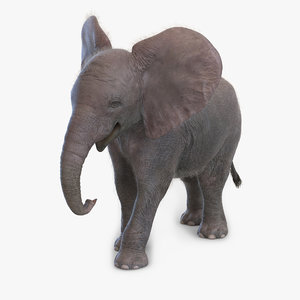 baby elephant pose 2 3d max