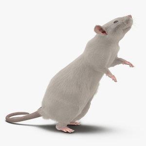 white rat pose 2 3d max