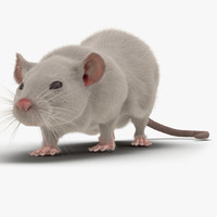 3d white rat pose 3 model