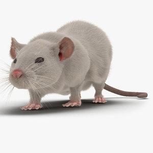 3d white rat pose 3 model