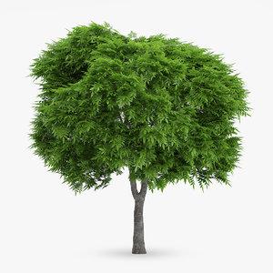 3d rowan tree 6 8m