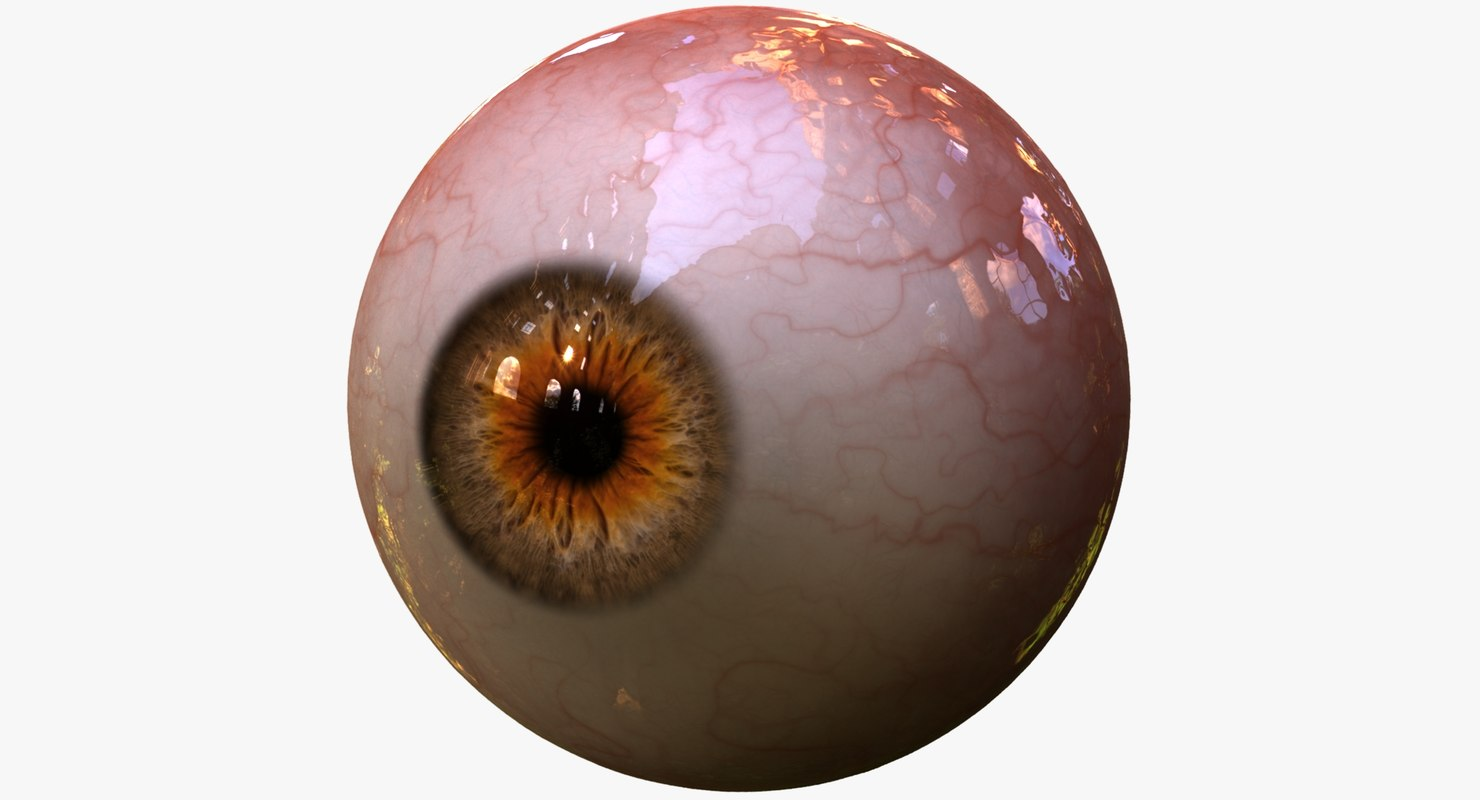 3d realistic human creature eye pupil model