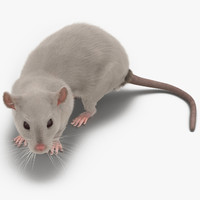 white rat pose 5 3d model