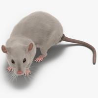 white rat pose 5 3d model