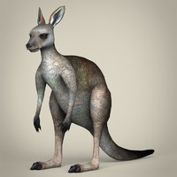 3d realistic kangaroo