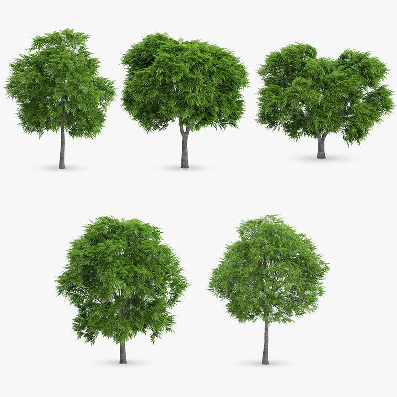 rowan trees 5 3d model