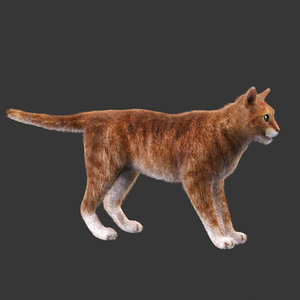 red cat rigged 3d max