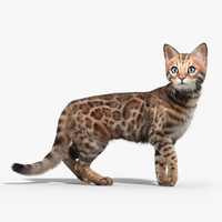 max bengal cat fur hair animation
