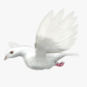 dove animation bird 3d model