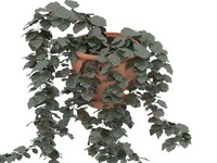 3d vegetation trees green model
