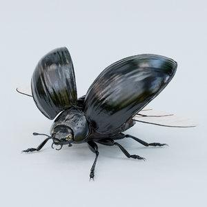 obj black beetle