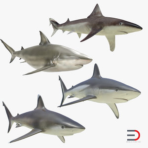 3d sharks 4