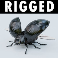3d black beetle rigged