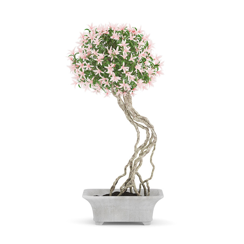 bonsai tree flowers pot 3d max
