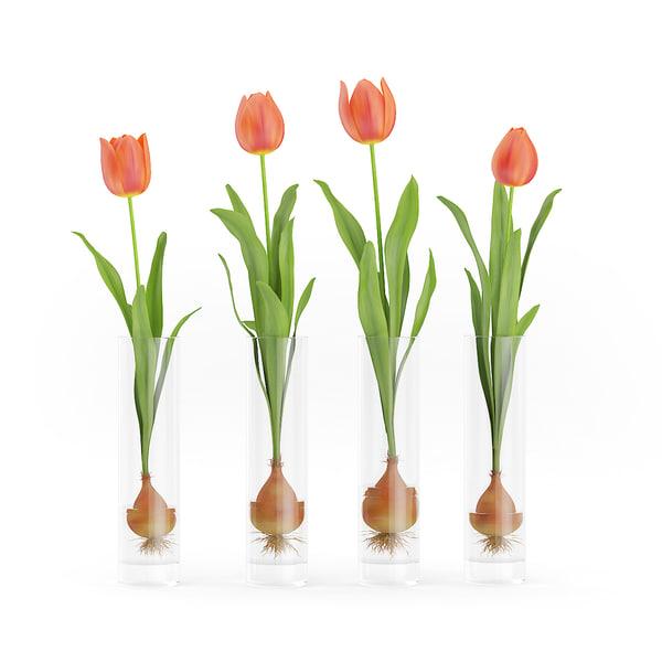 tulips glasses max