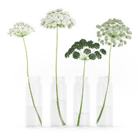 Wild Carrot Flowers in Glass Jars