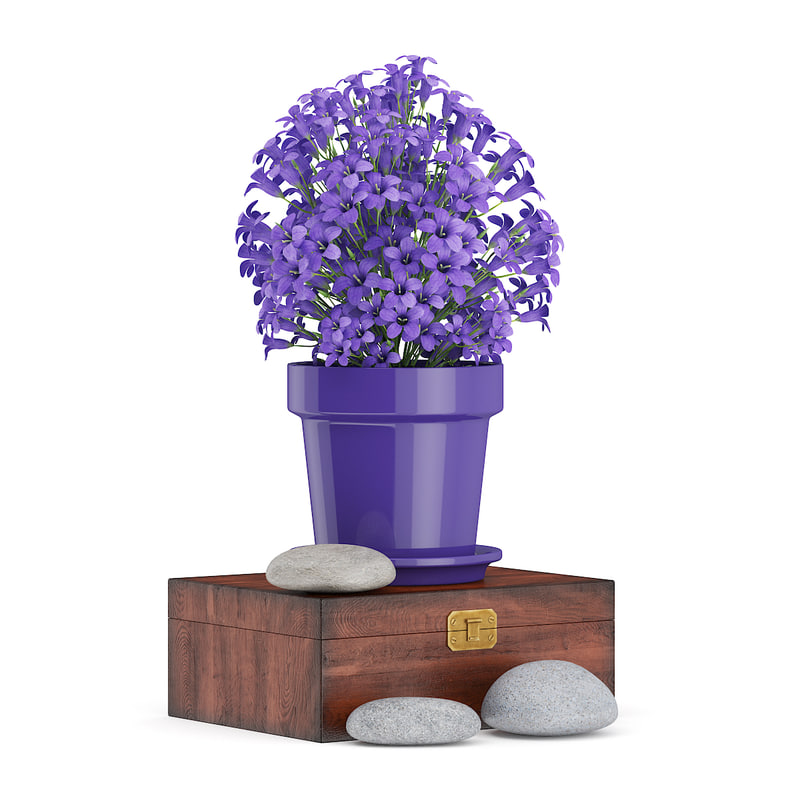 purple flowers wooden box 3d fbx