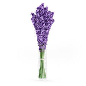3d model violet lupine flowers glass vase