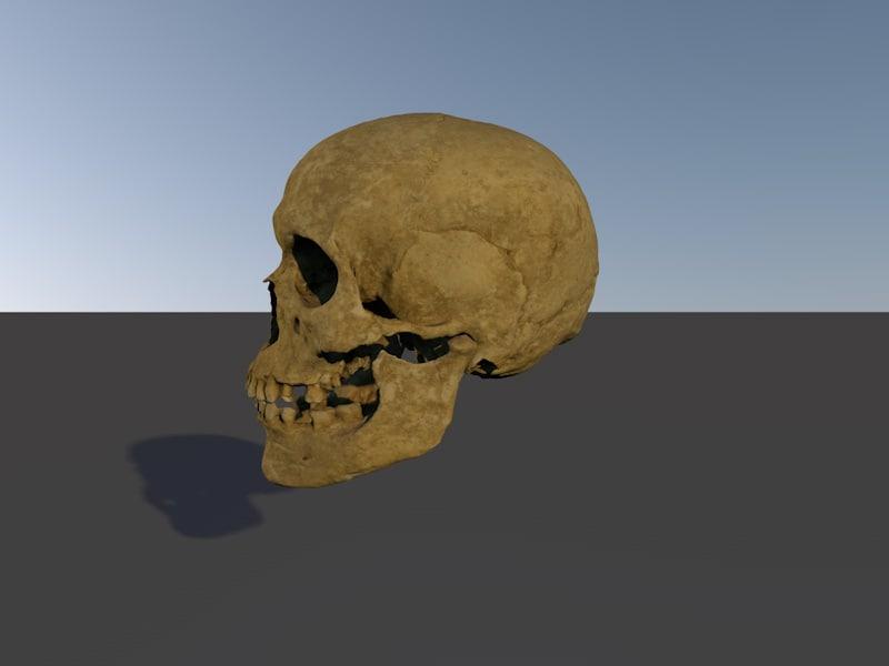 skull adult obj
