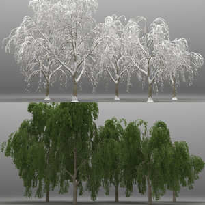 3d model 5 willow tree
