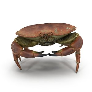 brown crab 3ds