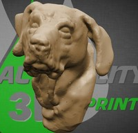 rodeziai ridgeback dog head 3d obj