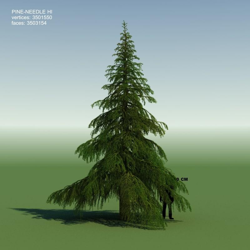 3d model conifer cedrus tree
