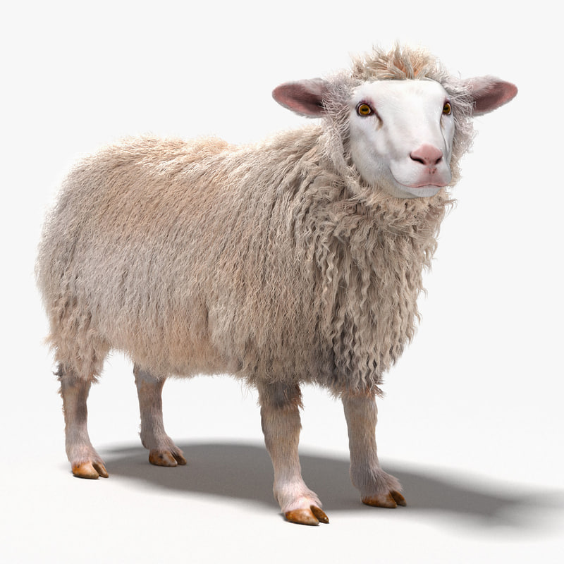 3d model realistic sheep