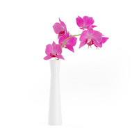 3d model pink orchid flower white