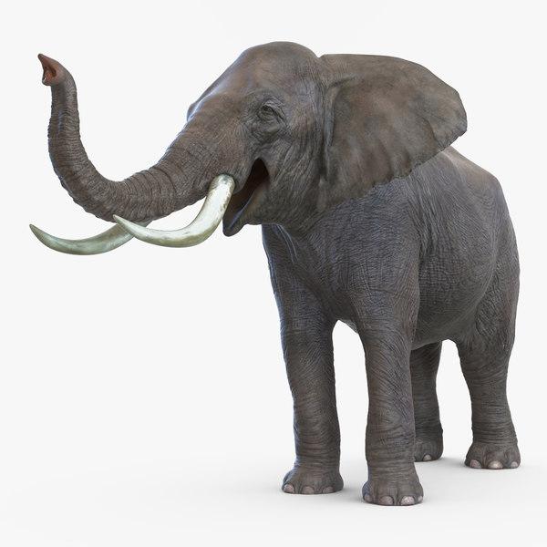3d elephant pose 3