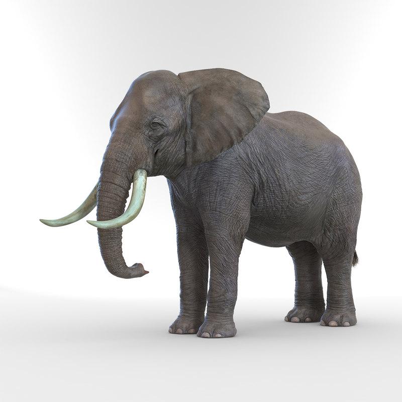elephant realistic 3d 3ds