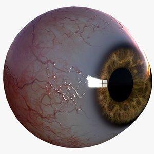 3d model realistic human eye