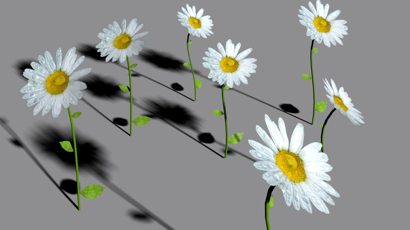 daisy obj