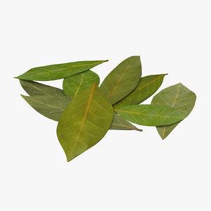 bay leaves 3d model