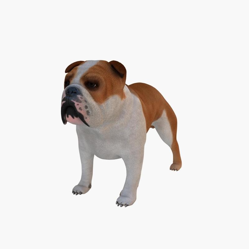 bulldog 3d obj