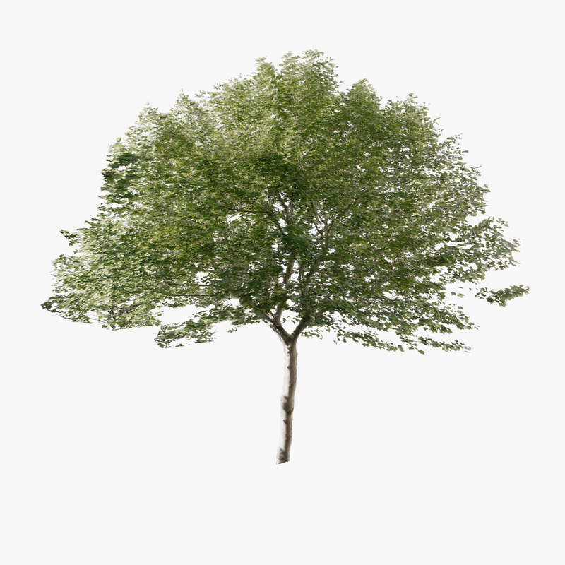 3d tree forest model