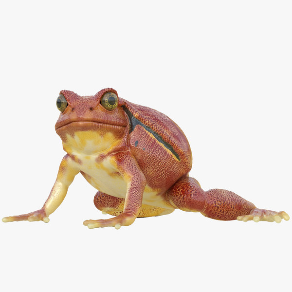 3d tomato frog rigged
