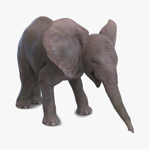 baby elephant pose 3 max