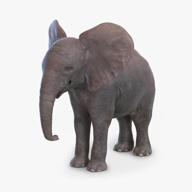 baby elephant 3d model