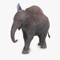 Baby Elephant Pose 2 3D Model