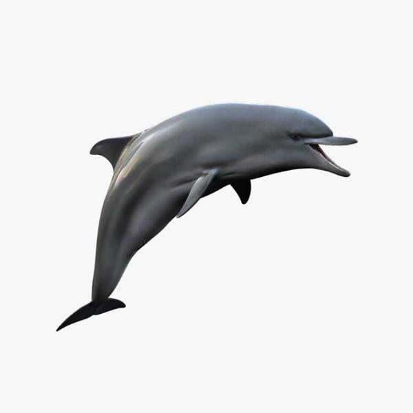 realistic dolphin rig 3d model