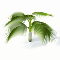 palm tree max free
